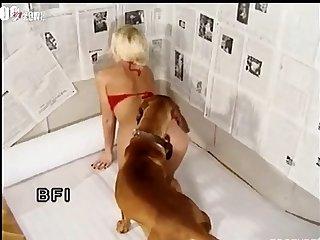 Amateur Dog porn Voyeur Porn 37